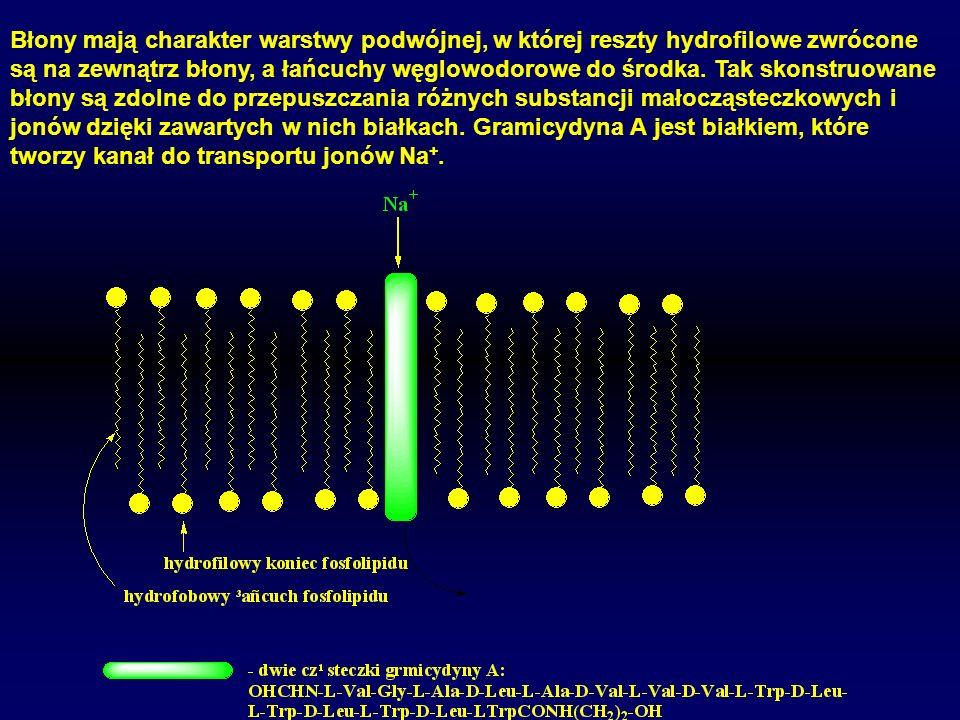 Błony mają charakter warstwy podwójnej, w której reszty hydrofilowe zwrócone są na zewnątrz błony, a łańcuchy węglowodorowe do środka. Tak skonstruowa