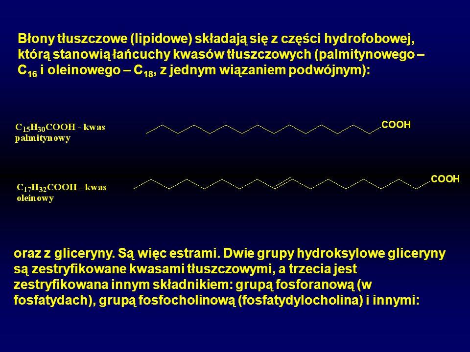 Błony tłuszczowe (lipidowe) składają się z części hydrofobowej, którą stanowią łańcuchy kwasów tłuszczowych (palmitynowego – C 16 i oleinowego – C 18,