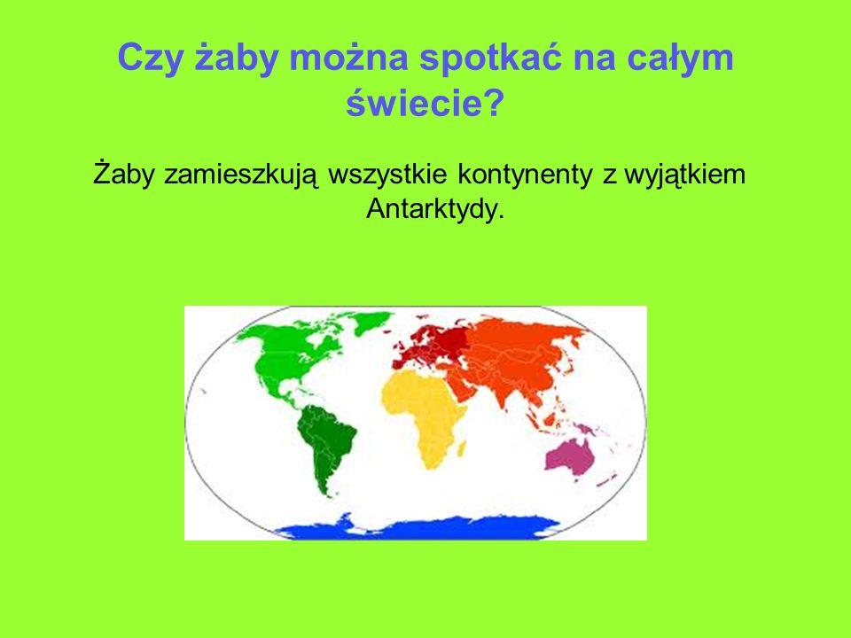Czy żaby można spotkać na całym świecie? Żaby zamieszkują wszystkie kontynenty z wyjątkiem Antarktydy.