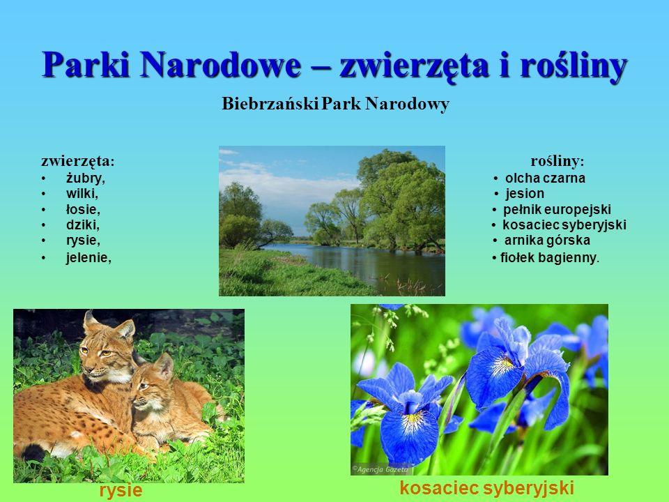 Parki Narodowe – zwierzęta i rośliny Biebrzański Park Narodowy zwierzęta : rośliny : żubry, olcha czarna wilki, jesion łosie, pełnik europejski dziki,