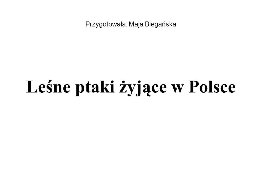 Przygotowała: Maja Biegańska Leśne ptaki żyjące w Polsce
