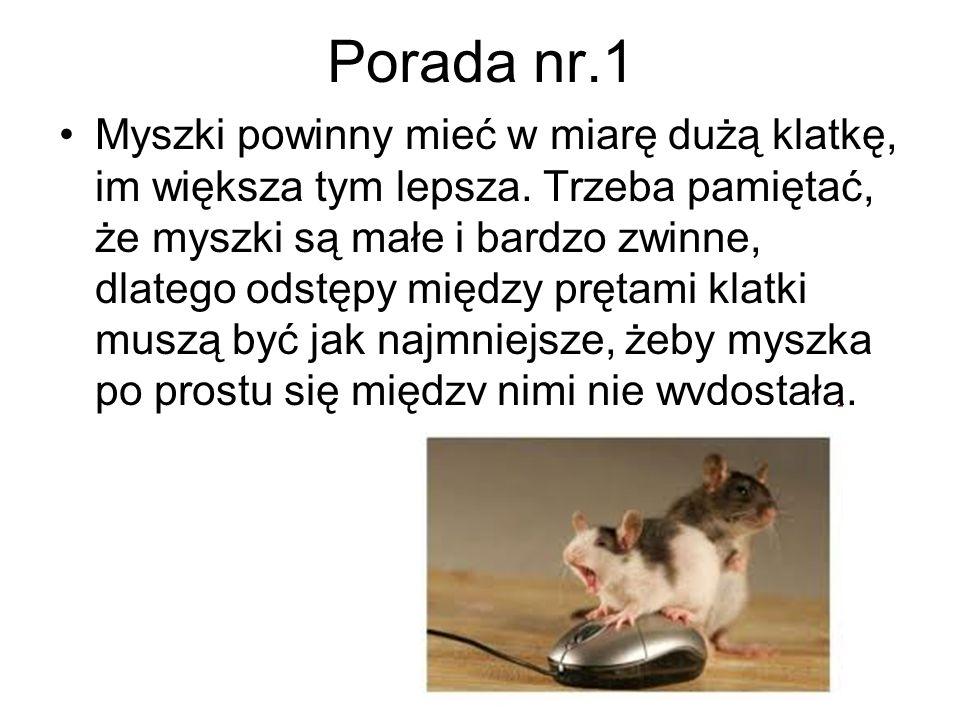 Porada nr.1 Myszki powinny mieć w miarę dużą klatkę, im większa tym lepsza. Trzeba pamiętać, że myszki są małe i bardzo zwinne, dlatego odstępy między