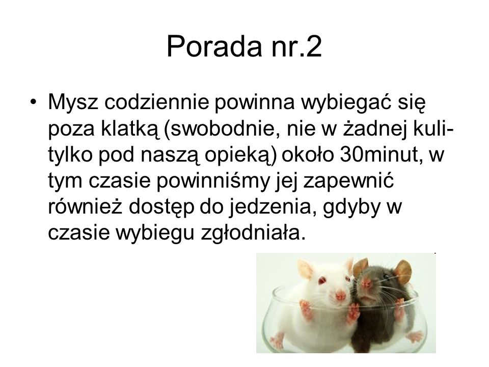 Porada nr.2 Mysz codziennie powinna wybiegać się poza klatką (swobodnie, nie w żadnej kuli- tylko pod naszą opieką) około 30minut, w tym czasie powinn