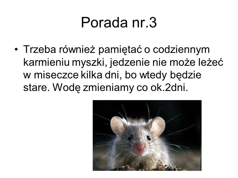 Porada nr.3 Trzeba również pamiętać o codziennym karmieniu myszki, jedzenie nie może leżeć w miseczce kilka dni, bo wtedy będzie stare. Wodę zmieniamy