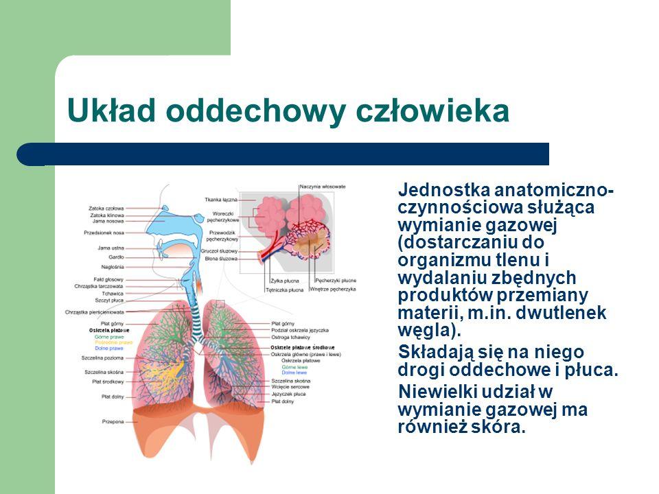 Układ oddechowy człowieka Jednostka anatomiczno- czynnościowa służąca wymianie gazowej (dostarczaniu do organizmu tlenu i wydalaniu zbędnych produktów