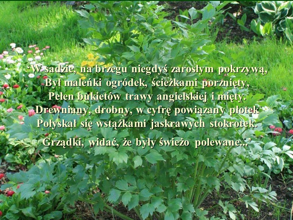 W sadzie, na brzegu niegdyś zarosłym pokrzywą, Był maleńki ogródek, ścieżkami porznięty, Pełen bukietów trawy angielskiej i mięty. Drewniany, drobny,