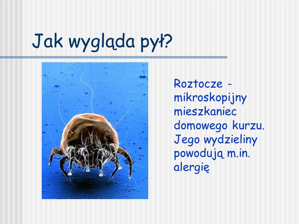 Jak wygląda pył? Roztocze - mikroskopijny mieszkaniec domowego kurzu. Jego wydzieliny powodują m.in. alergię