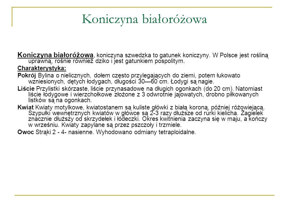 Koniczyna białoróżowa Koniczyna białoróżowa, koniczyna szwedzka to gatunek koniczyny. W Polsce jest rośliną uprawną, rośnie również dziko i jest gatun