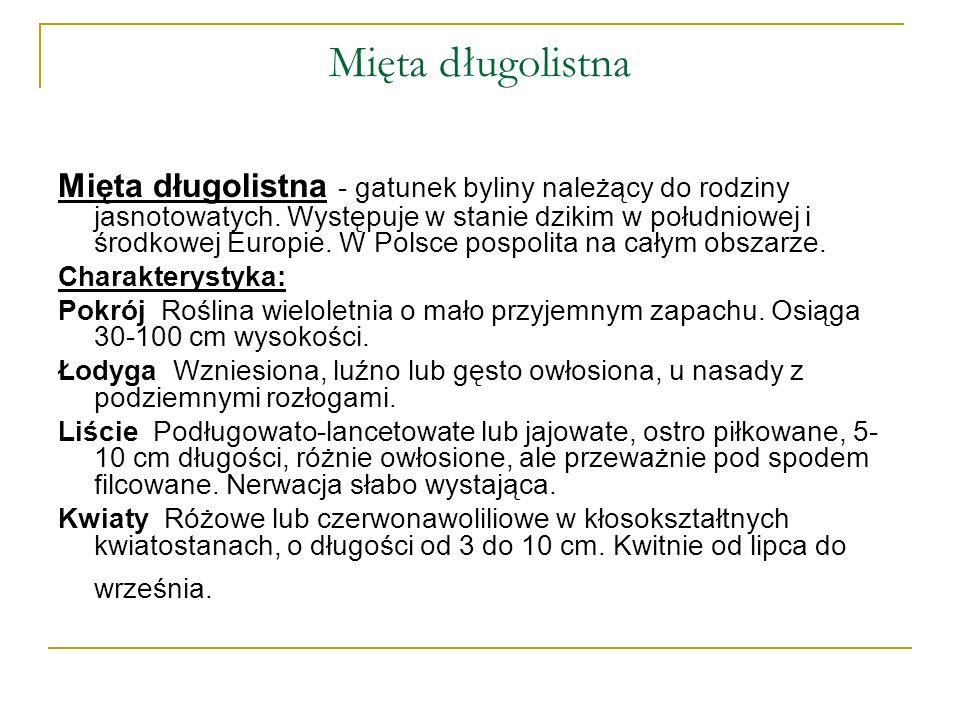 Mięta długolistna Mięta długolistna - gatunek byliny należący do rodziny jasnotowatych. Występuje w stanie dzikim w południowej i środkowej Europie. W