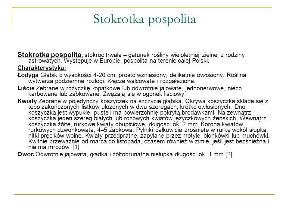 Stokrotka pospolita Stokrotka pospolita, stokroć trwała – gatunek rośliny wieloletniej zielnej z rodziny astrowatych. Występuje w Europie, pospolita n