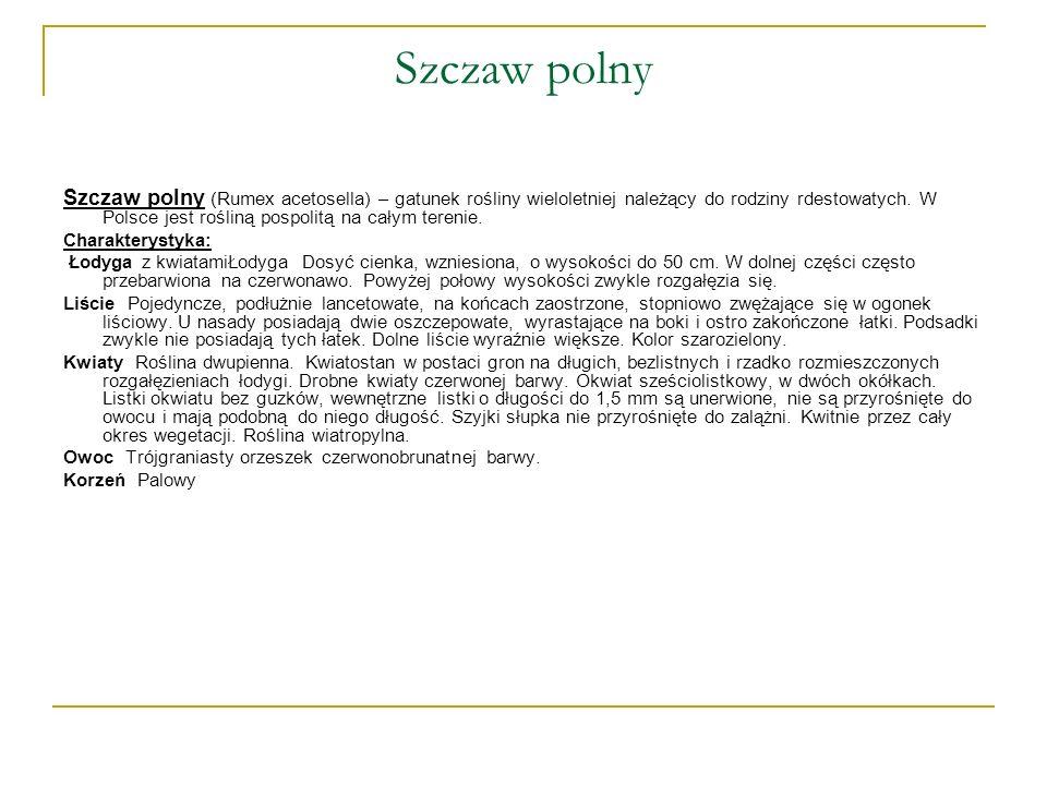 Szczaw polny Szczaw polny (Rumex acetosella) – gatunek rośliny wieloletniej należący do rodziny rdestowatych. W Polsce jest rośliną pospolitą na całym