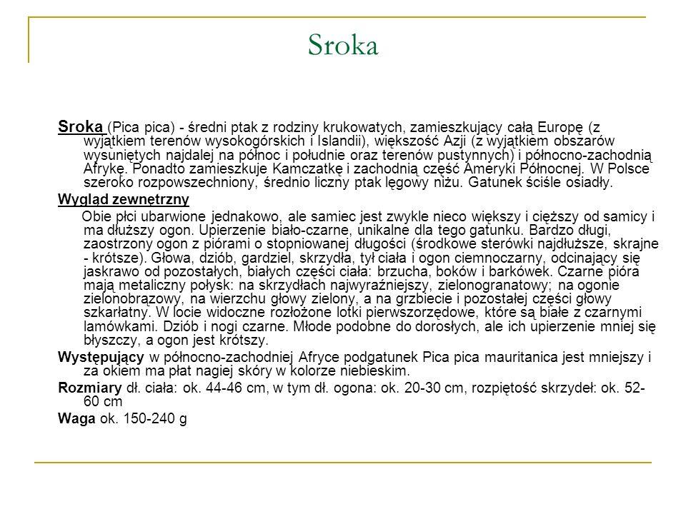 Sroka Sroka (Pica pica) - średni ptak z rodziny krukowatych, zamieszkujący całą Europę (z wyjątkiem terenów wysokogórskich i Islandii), większość Azji