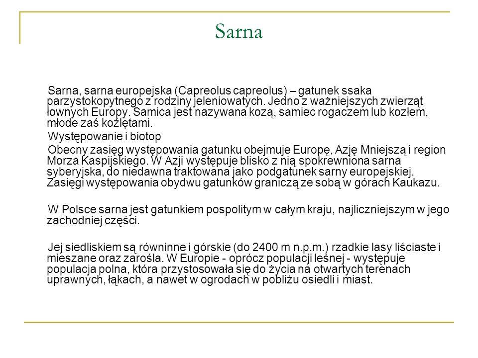 Sarna Sarna, sarna europejska (Capreolus capreolus) – gatunek ssaka parzystokopytnego z rodziny jeleniowatych. Jedno z ważniejszych zwierząt łownych E