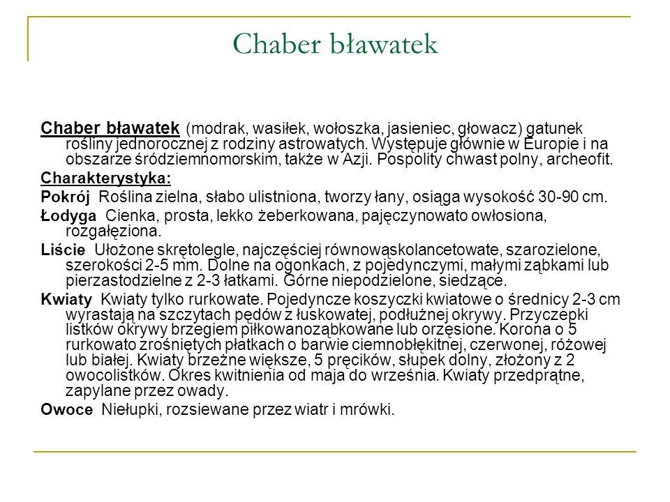 Chaber bławatek Chaber bławatek (modrak, wasiłek, wołoszka, jasieniec, głowacz) gatunek rośliny jednorocznej z rodziny astrowatych. Występuje głównie