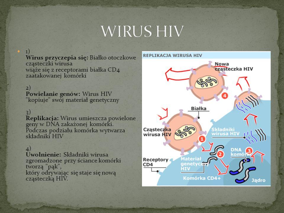 1) Wirus przyczepia się: Białko otoczkowe cząsteczki wirusa wiąże się z receptorami białka CD4 zaatakowanej komórki 2) Powielanie genów: Wirus HIV