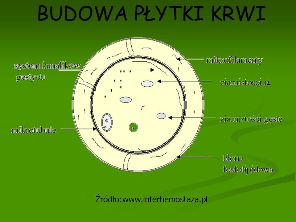 BUDOWA PŁYTKI KRWI Źródło:www.interhemostaza.pl