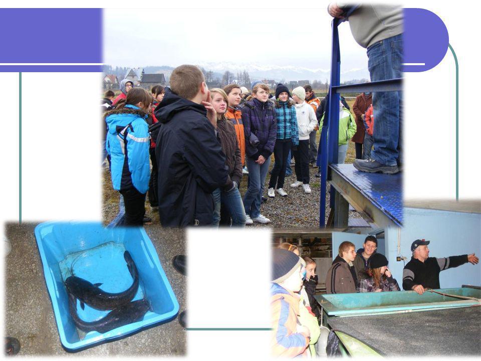 W dniach od 6 do 20 listopada 2009r na terenie domów mieszkalnych w miejscowościach: Sieniawa, Raba Wyżna, Rokiciny Podhalańskie przeprowadziliśmy badanie stopnia zapylenia w różnych miejscach (schody, kotłownia, pokój)