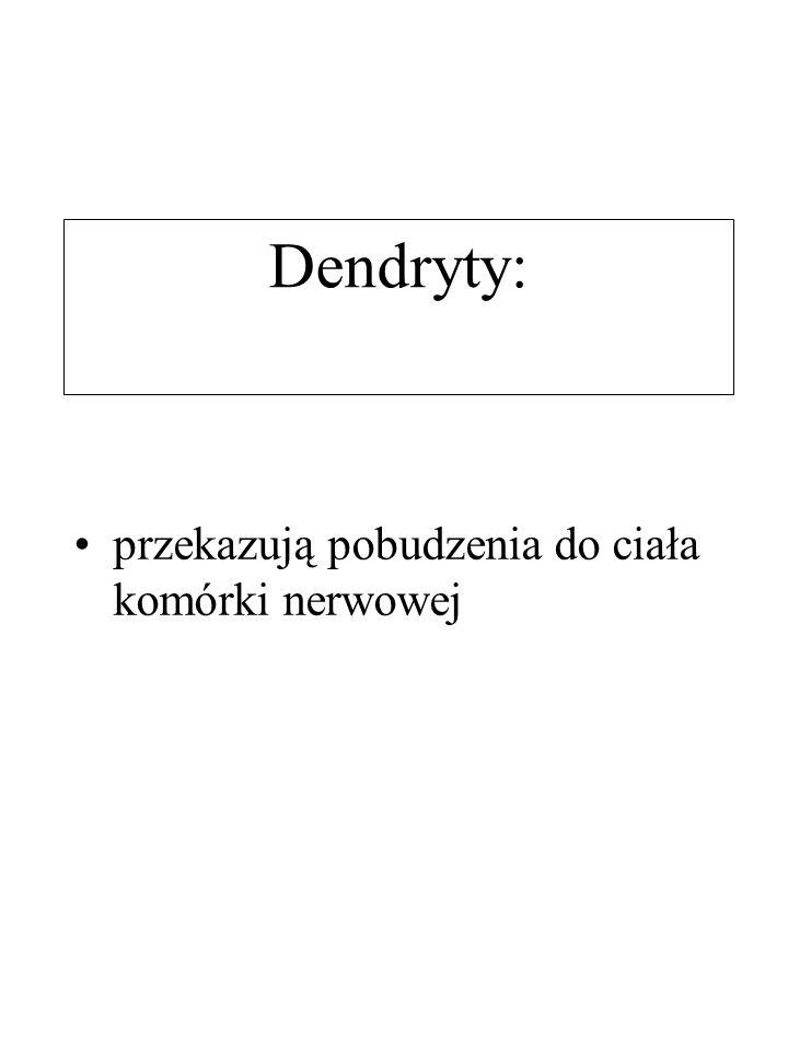 Dendryty: przekazują pobudzenia do ciała komórki nerwowej