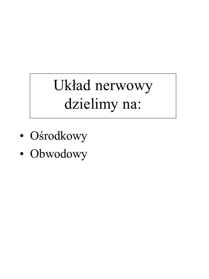 Układ nerwowy dzielimy na: Ośrodkowy Obwodowy