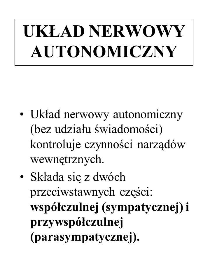 UKŁAD NERWOWY AUTONOMICZNY Układ nerwowy autonomiczny (bez udziału świadomości) kontroluje czynności narządów wewnętrznych. Składa się z dwóch przeciw