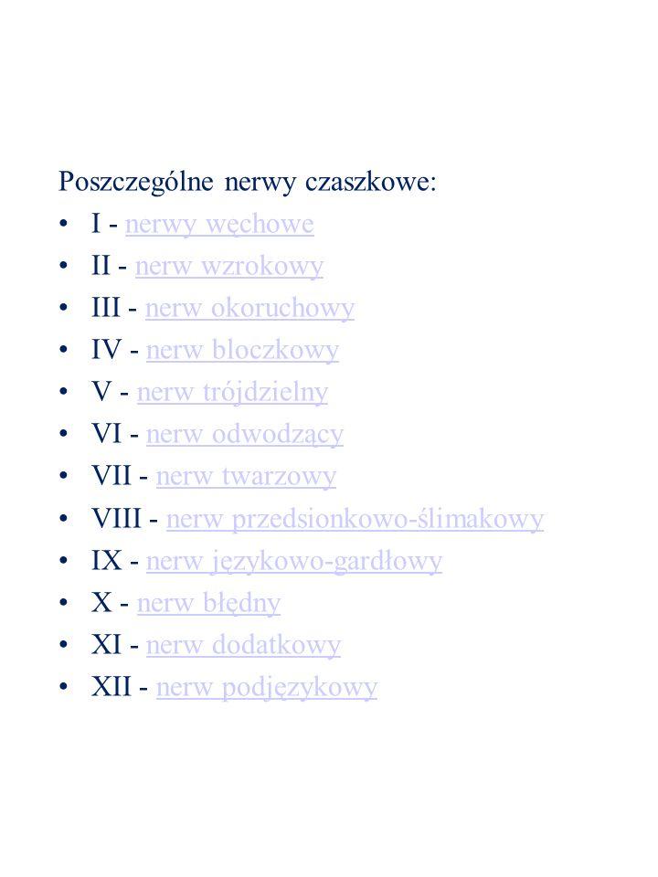Poszczególne nerwy czaszkowe: I - nerwy węchowenerwy węchowe II - nerw wzrokowynerw wzrokowy III - nerw okoruchowynerw okoruchowy IV - nerw bloczkowyn