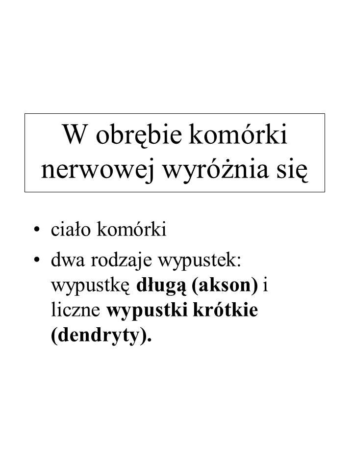 Mózgowie - podstawa