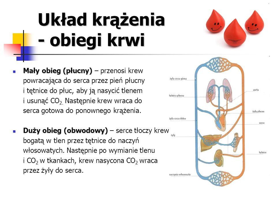 Układ krążenia - obiegi krwi Mały obieg (płucny) Mały obieg (płucny) – przenosi krew powracająca do serca przez pień płucny i tętnice do płuc, aby ją