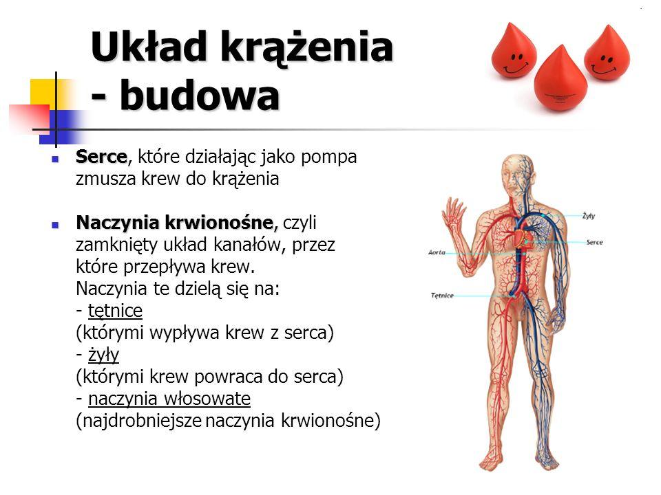 Układ krążenia - budowa Serce Serce, które działając jako pompa zmusza krew do krążenia Naczynia krwionośne, Naczynia krwionośne, czyli zamknięty ukła