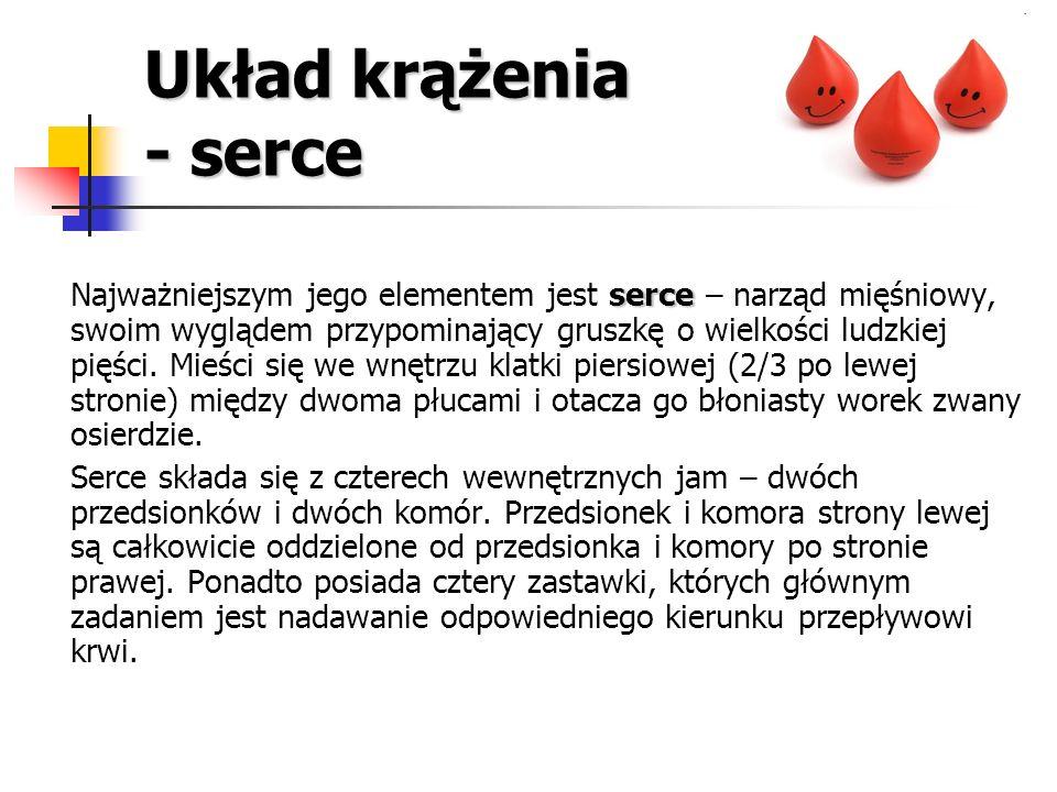 Krążenie krwi a praca dynamiczna W czasie pracy dynamicznej (np.