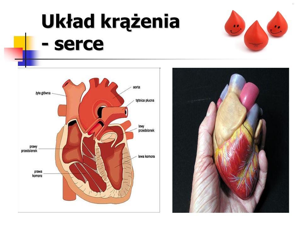 Układ krążenia - czynności Podstawową czynnością układu krążenia jest zapewnienie przepływu krwi w naczyniach.
