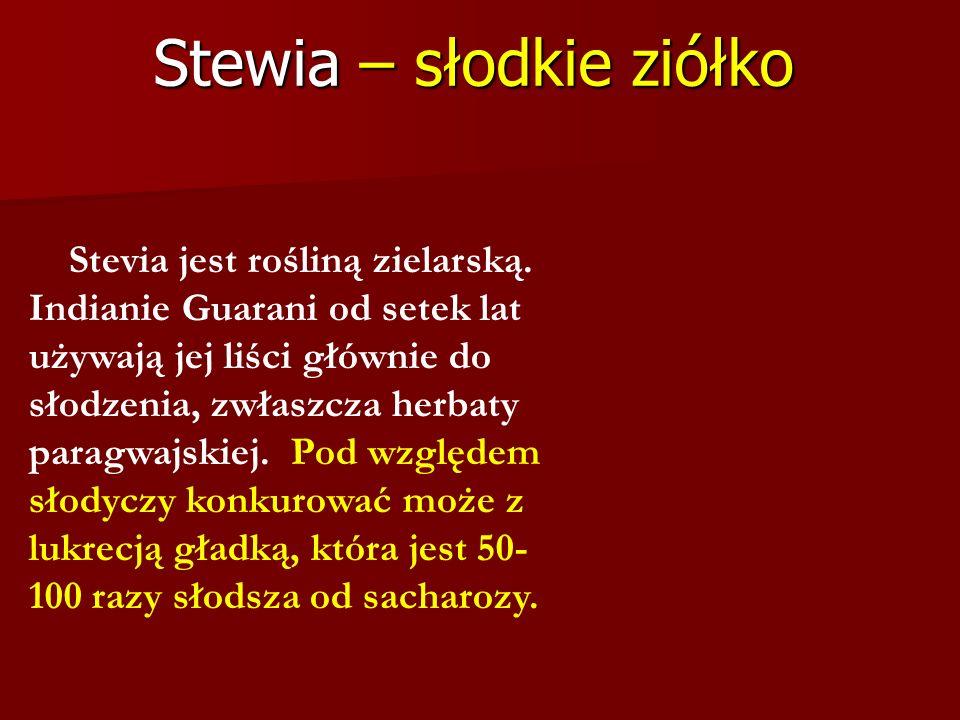 Stewia – słodkie ziółko Stevia jest rośliną zielarską. Indianie Guarani od setek lat używają jej liści głównie do słodzenia, zwłaszcza herbaty paragwa