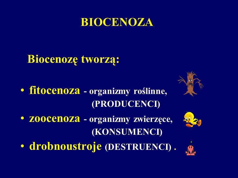 Biocenozę tworzą: fitocenoza - organizmy roślinne, (PRODUCENCI) zoocenoza - organizmy zwierzęce, (KONSUMENCI) drobnoustroje (DESTRUENCI). BIOCENOZA