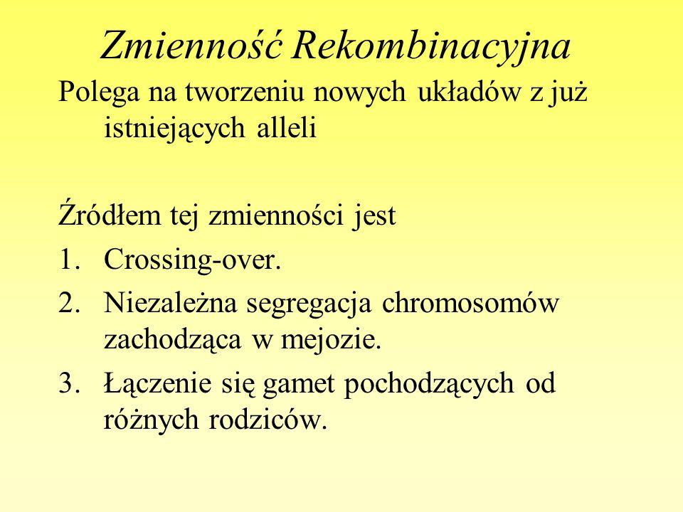 Zmienność Rekombinacyjna Polega na tworzeniu nowych układów z już istniejących alleli Źródłem tej zmienności jest 1.Crossing-over. 2.Niezależna segreg