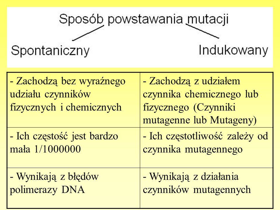 - Zachodzą bez wyraźnego udziału czynników fizycznych i chemicznych - Zachodzą z udziałem czynnika chemicznego lub fizycznego (Czynniki mutagenne lub
