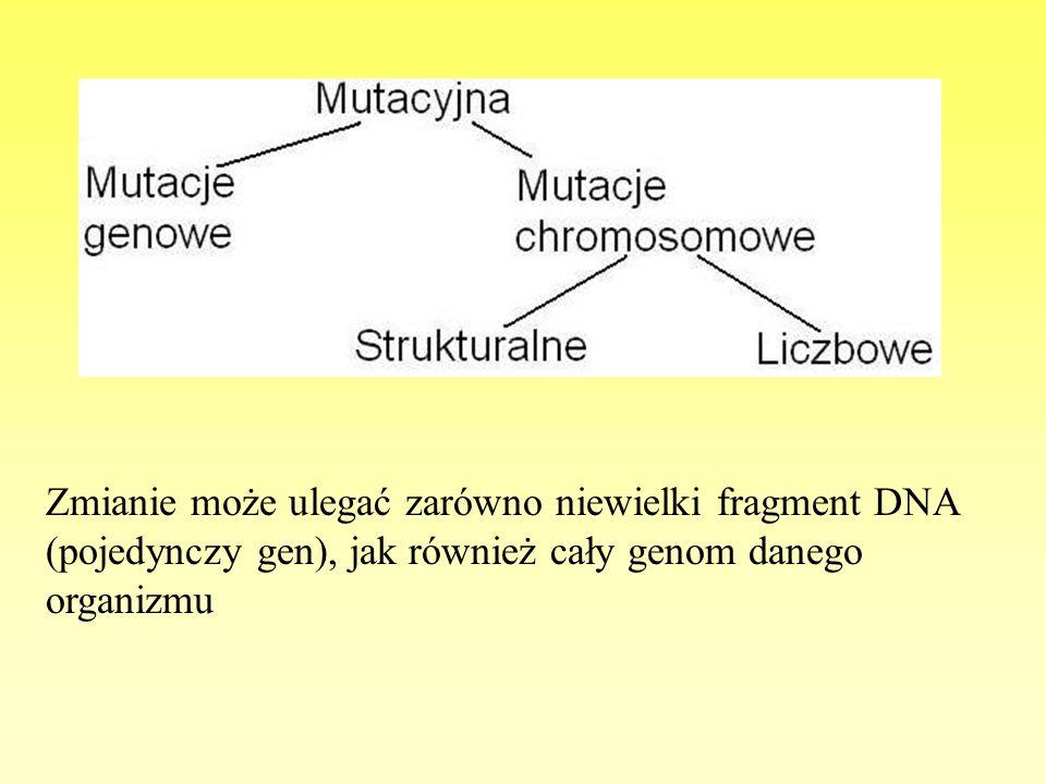 Zmianie może ulegać zarówno niewielki fragment DNA (pojedynczy gen), jak również cały genom danego organizmu