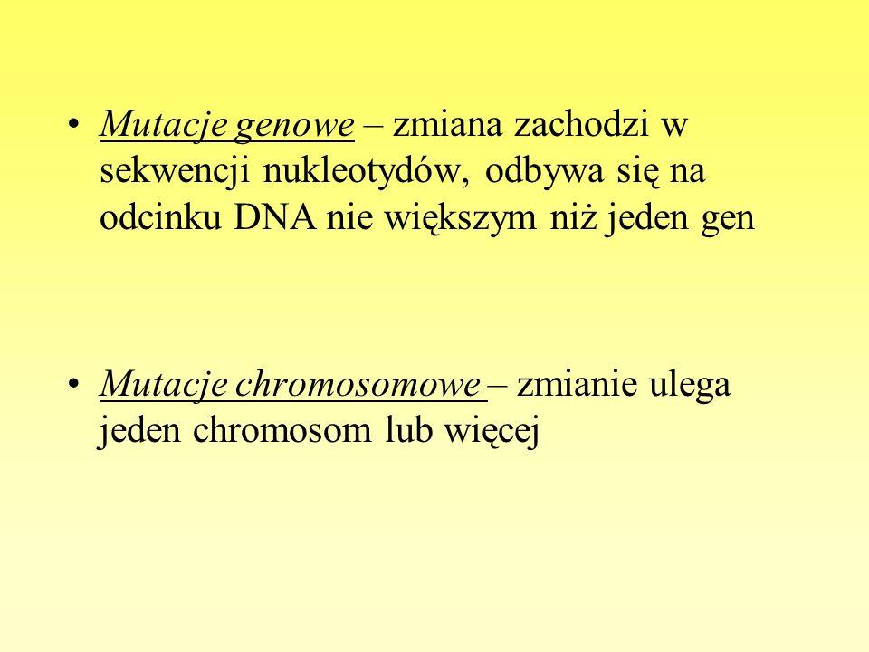 Mutacje genowe – zmiana zachodzi w sekwencji nukleotydów, odbywa się na odcinku DNA nie większym niż jeden gen Mutacje chromosomowe – zmianie ulega je