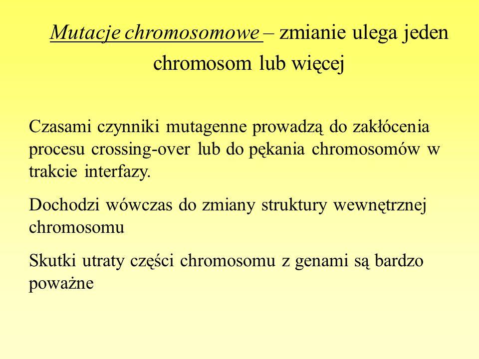 Mutacje chromosomowe – zmianie ulega jeden chromosom lub więcej Czasami czynniki mutagenne prowadzą do zakłócenia procesu crossing-over lub do pękania