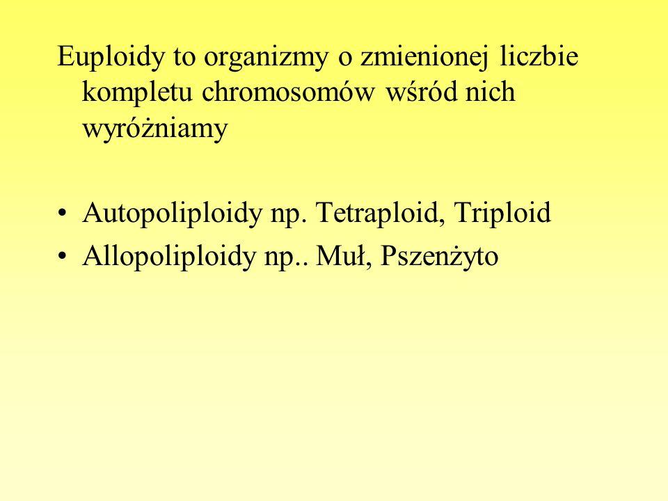 Euploidy to organizmy o zmienionej liczbie kompletu chromosomów wśród nich wyróżniamy Autopoliploidy np. Tetraploid, Triploid Allopoliploidy np.. Muł,