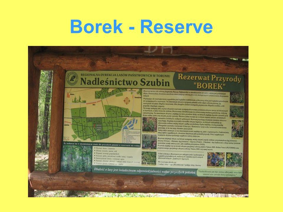Borek - Reserve