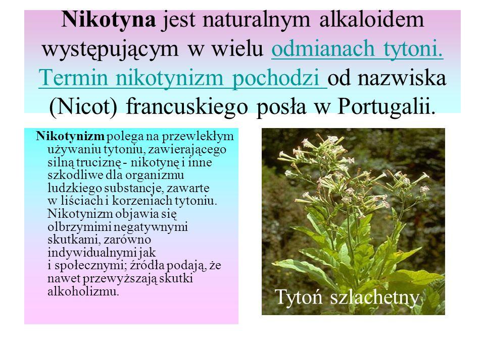 Nikotyna jest naturalnym alkaloidem występującym w wielu odmianach tytoni.