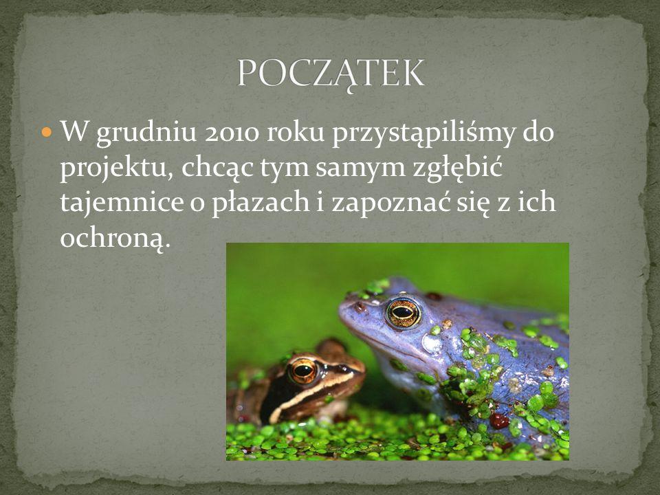Oprócz żyjących tam w ogromnych ilościach żab trawnych zauważyliśmy również: ROŚLINYZWIERZĘTA rzęsa wodnatraszka zwyczajna trzcina pospolitakaczki krzyżówki turzycepijawki lekarskie nartniki