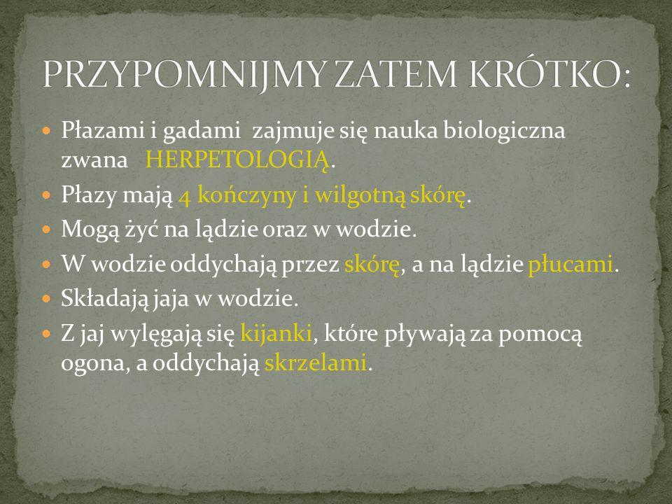 GROMADA płazów występujących w Polsce dzieli się na 2 RZĘDY: OGONIASTE ( 5 gatunków)– do nich należą: SALAMANDRY- np.
