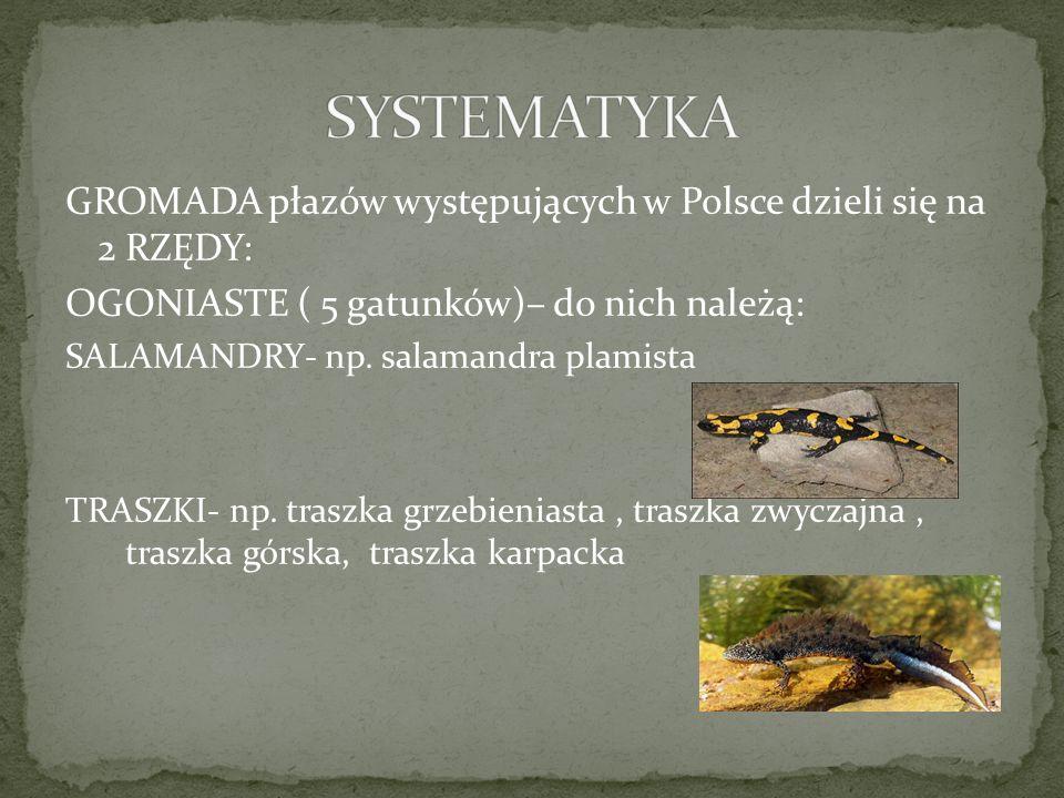 GROMADA płazów występujących w Polsce dzieli się na 2 RZĘDY: OGONIASTE ( 5 gatunków)– do nich należą: SALAMANDRY- np. salamandra plamista TRASZKI- np.