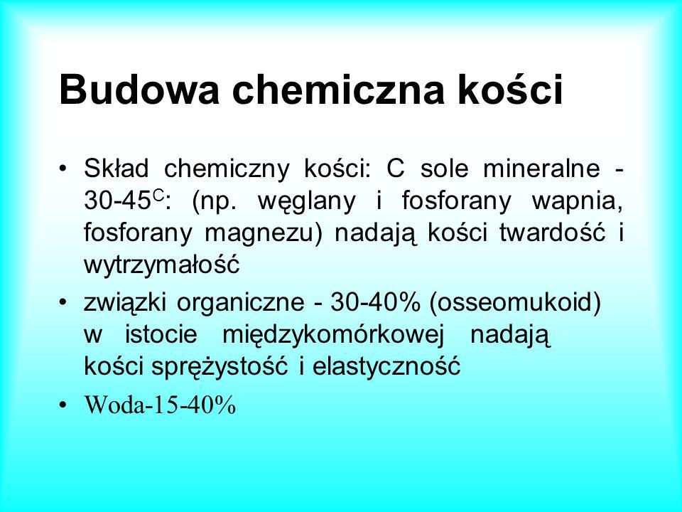 Budowa chemiczna kości Skład chemiczny kości: C sole mineralne - 30-45 C : (np. węglany i fosforany wapnia, fosforany magnezu) nadają kości twardość