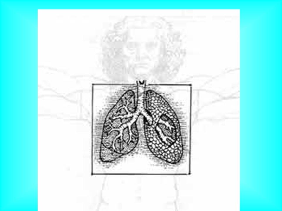 Płuca 1.Płuca - narząd parzysty o gąbczastej strukturze, leżącym wewnątrz klatki piersiowej.