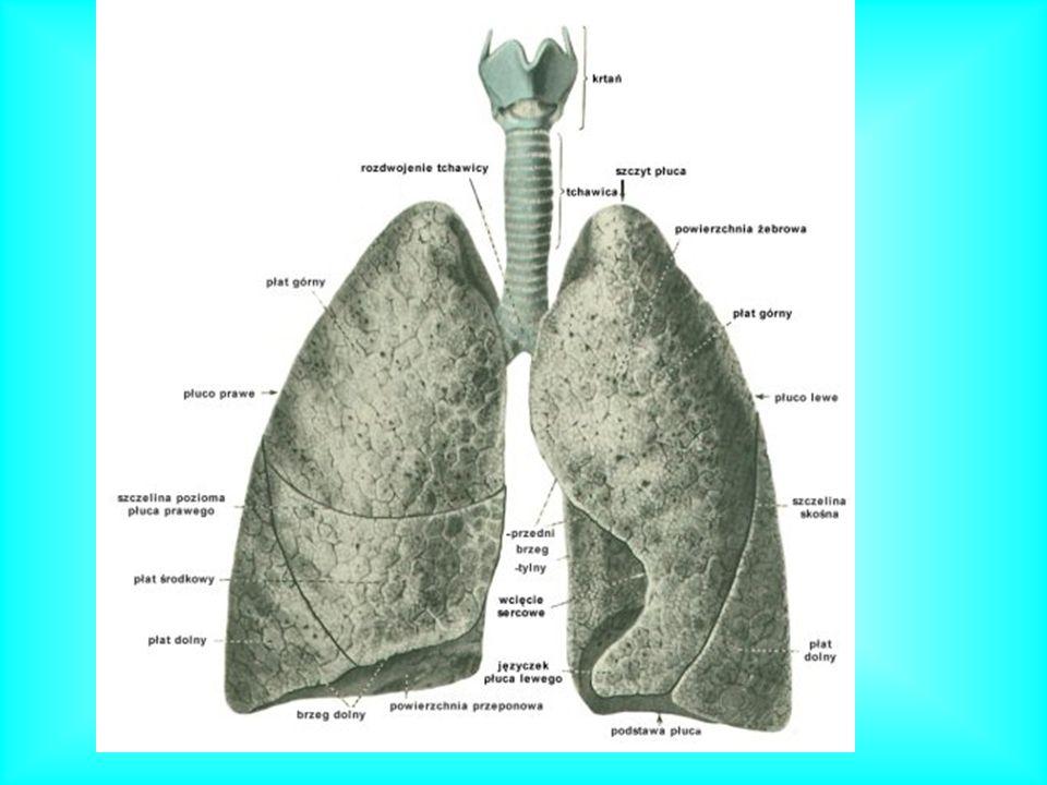 Pęcherzyki płucne