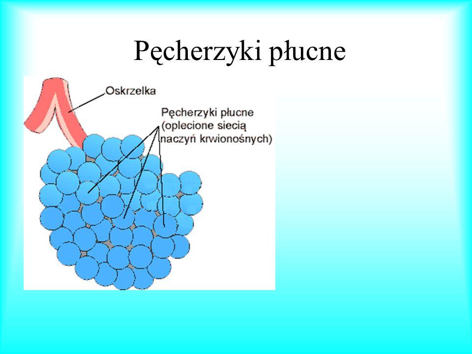Funkcje szkieletu wzrostową (przyrost koście decyduje o wzroście organizmu); ochronną dla narządów; krwiotwórczą (szpik kostny wypełniający wnętrze kości tworzy ciałka krwi); magazynującą (w kościach gromadzi się wiele soli mineralnych, szczególnie soli wapnia).