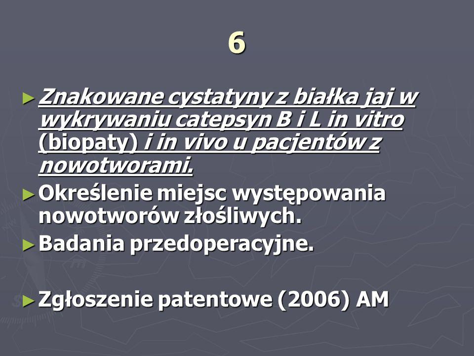 6 Znakowane cystatyny z białka jaj w wykrywaniu catepsyn B i L in vitro (biopaty) i in vivo u pacjentów z nowotworami. Znakowane cystatyny z białka ja