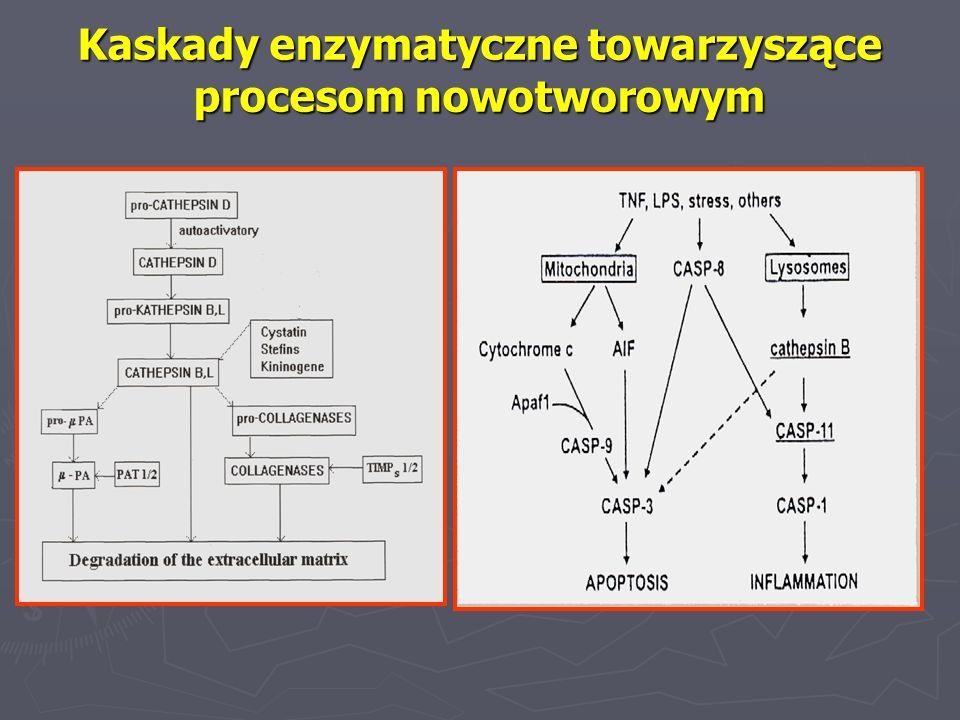 Kaskady enzymatyczne towarzyszące procesom nowotworowym