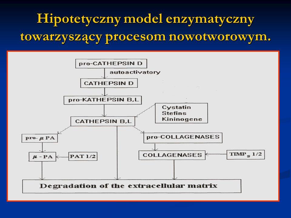 Hipotetyczny model enzymatyczny towarzyszący procesom nowotworowym.